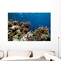 Wallmonkeys Fish Coral and Ocean Wall Decal Peel and Stick Graphic WM117801 (48 in W x 32 in H) [並行輸入品]