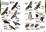 ♪鳥くんの比べて識別!野鳥図鑑670 第3版 画像