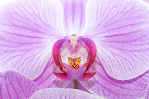 Photo Book Orchid Flower: Mix 100 +++ Pictures (English Edition)