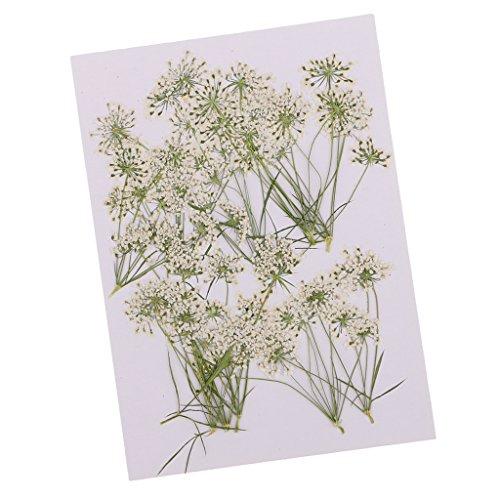 Fityle 乾燥した花 押し花 レースの花 本物 カード作成 蝋燭作り 10個入り