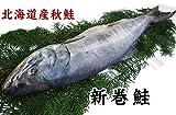 北海道産【新巻鮭】姿1匹(2kg前後)化粧箱入り[冷凍]【未カット品・調理前にカットが必要です】白鮭シロザケ・秋鮭・新巻き鮭サケ 昔なつかしい味!
