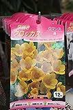 秋植え球根 早咲きクロッカス12球入り ロマンス(黄) 2袋セット  送料込
