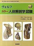 ヴォルフ カラー人体解剖学図譜