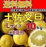 高知産土佐文旦Lサイズ・ご家庭用10kg