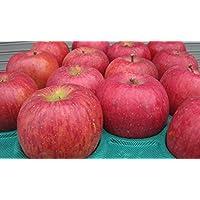 長野県産 生産農家直送 訳ありりんご 「サンふじ」 ご家庭向き 24~40玉 約10kg入り/箱