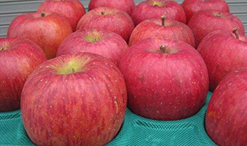 長野県産 生産農家直送 訳ありりんご 「サンふじ」 ご家庭向き 24〜40玉 約10kg入り/箱