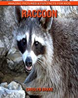 Raccoon: Amazing Pictures & Fun Facts for Kids