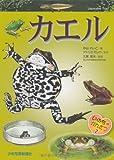 カエル (いのちのかんさつ)