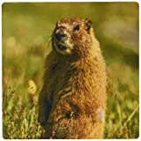 マーモット 3dRose USA Colorado San Juan Mountains Close-Up of Yellow-Bellied Marmot Mouse Pad (mp_190857_1) [並行輸入品]
