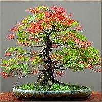 スワングリーン1:50PCSレアメープルシードグリーン&パープルカラーレッドフォレージフラワーポットプランター用鉢植え鉢植え1