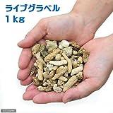 (海水魚 ろ材)バクテリア付き ライブグラベル(1kg) 本州・四国限定[生体]