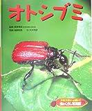 ドキドキいっぱい!虫のくらし写真館〈19〉オトシブミ