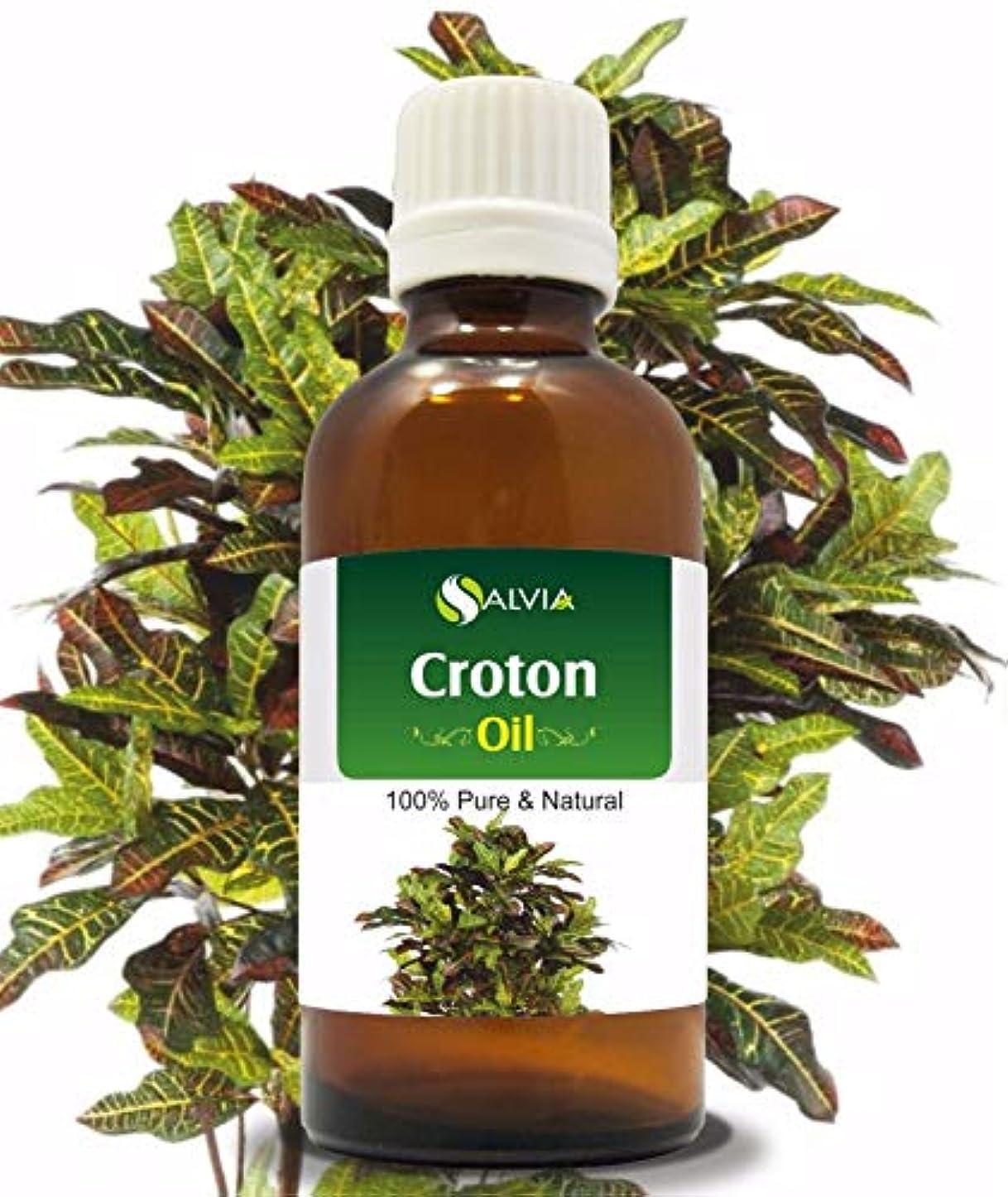 鯨悪い崩壊Croton (Crotonis Oleum) 100% Natural Pure Carrier Oil 50ml