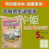 ≪特別栽培米(減農薬米)≫宮城県志波姫産白鳥農場のお米「つや姫」生産者「白鳥一彦」玄米5kg