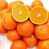 和歌山県産 木成り 完熟セミノール 約2.5kg 春 みかん 旬 フルーツ 果物 柑橘