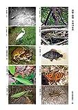 2019年度 生物分類技能検定 試験問題集 2級 動物部門 画像