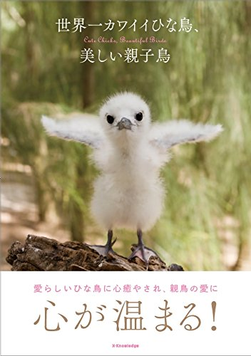 世界一カワイイひな鳥、美しい親子鳥の詳細を見る