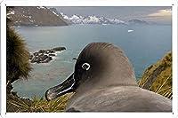 オーシャンの近くで巣#27897 Seagulのティンサイン 金属看板 ポスター / Tin Sign Metal Poster of #27897 Seagul In Nest Near Ocean
