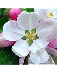 アロマフレグランスオイル 日本モクレン(Japanese Magnolia)