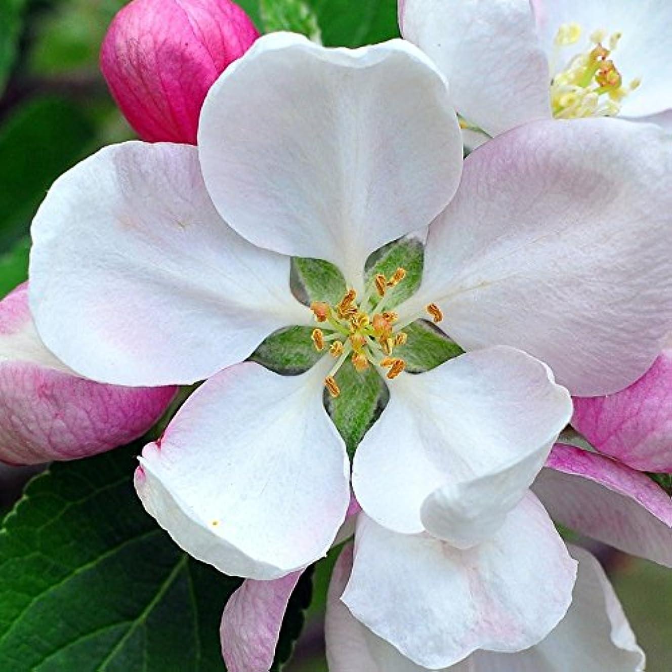 狐ストローク飼いならすアロマフレグランスオイル 日本モクレン(Japanese Magnolia)