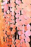 アジアン 雑貨 バリ ♪デコレーションピンクシェル(5本セット)♪ おしゃれ インテリア エスニック 貝殻 のれん キラキラ