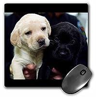 3Dローズ 犬 ラブラドール レトリーバー犬 - 黒と黄色のラブラドールの子犬 - マウス パッド - マウスパッド - mp_1219_1 (並行輸入)