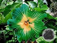9:50個/バッグハイビスカスの花の種多年生の非常に簡単な栽培植木鉢プランター観賞用植物盆栽ツリー用販売