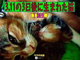 [モモの缶詰]の3.11の3日後に生まれた猫1 誕生