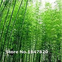 レアブーイングの種、10種類50ミックスカラーフラワー種子、ホーム&ガーデンのための高survlレート