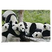 300ピース Earth パンダ みんな仲良し 300-170