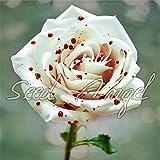 トゥルーブラッドレアブラックローズの種、レア驚くほど美しい黒薔薇赤いエッジ苗種子150個/ロット