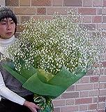 もらって嬉しい抱えきれないほどのかすみ草の花束