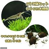 (エビ・貝)コケ対策セット 60cm水槽用 ヤマトヌマエビ(10匹) + 石巻貝(10匹) 本州・四国限定[生体]