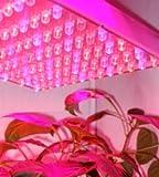 驚異のΦ10強力LED112球!水耕栽培野菜工場 プロ専用 / Lien-inc