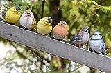 小鳥 置物 6個 ガーデニング 雑貨 庭 庭園 動物 鳥 インテリア オーナメント ガーデン 英国風 カワイイ 森 トリ セット