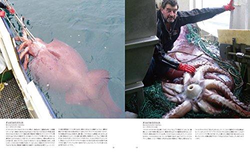 世界で一番美しいイカとタコの図鑑