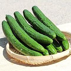 大内ファーム 農家直送 もぎたて新鮮きゅうり A級品 1kg オフリンク OFs-Link
