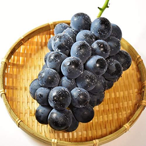 南信州ここだに 長野県産 巨峰 ぶどう 芳醇な甘み 贈答用 産地直送 ギフト (2kg 4房入り)