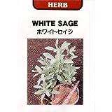 [タネ]ホワイトセージ(セイジ)の種 2袋セット