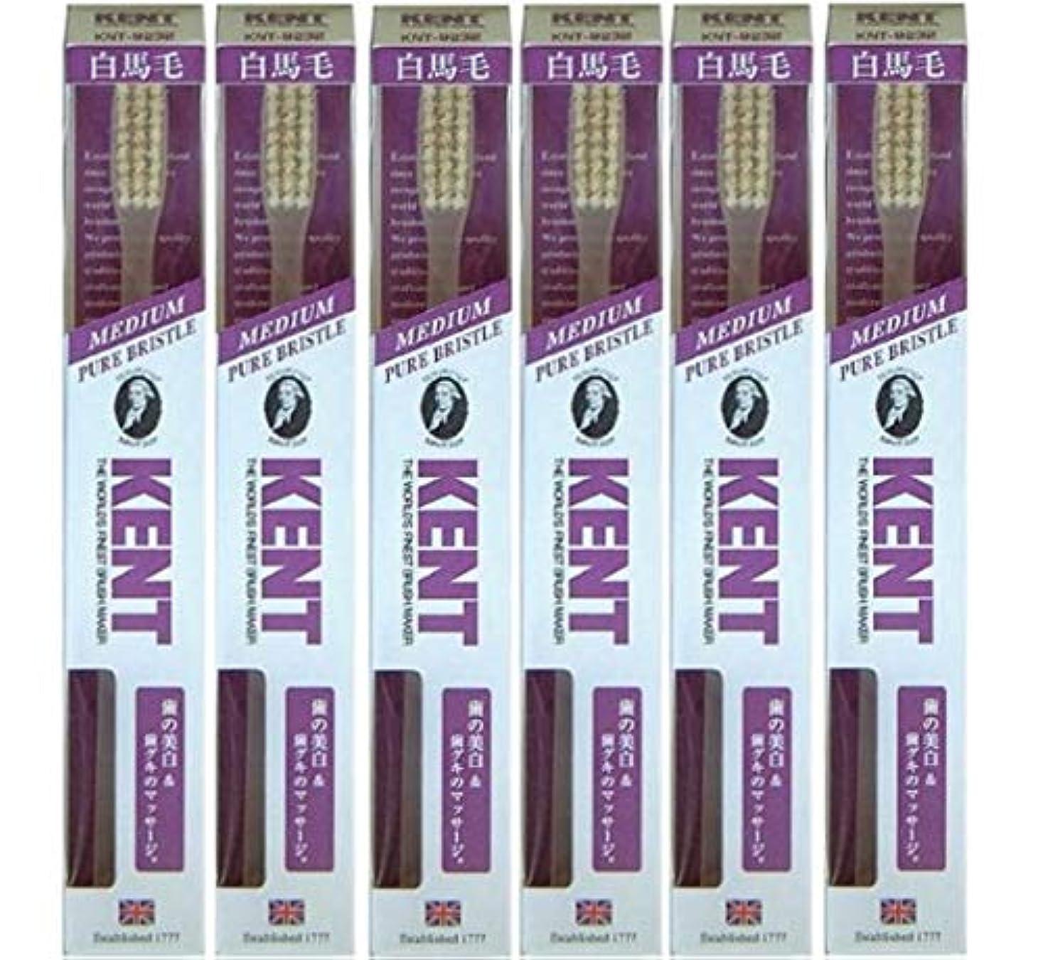 【6本セット】KENT 白馬毛歯ブラシ KNT-9232 ラージヘッド ふつう