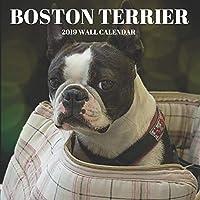 Boston Terrier 2019 Wall Calendar: Mini Wall Calendar Dog Photography 12 Month Calendar Planner