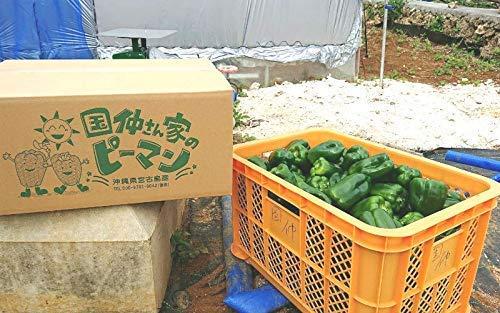 ☆おかげさまで20周年☆ 宮古島産 ピーマン (ちぐさ) 10kg (A品)