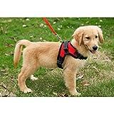 胴輪 ハーネス 犬 用 小型犬 中型犬 大型犬 4サイズ 夏 高品質メッシュ製 ((Mサイズ)胸周り:51-64cm, 赤)