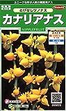 サカタのタネ 実咲花6578 カナリアなす とげなしつのなす 00906578