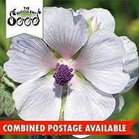 種子:マーシュマローの花 - (50種)蝶美しく香りを引き付けます