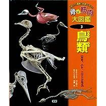 「体」と「運動」を調べよう!骨と筋肉大図鑑〈3〉鳥類―カモ、ハト、ニワトリなど