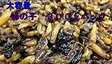 蜂の子(へぼ) 300g