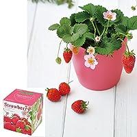 [ギフトに]ピンクの花咲く ストロベリー栽培セット(ラッピング付き)[可憐な花と赤い果実 お部屋を華やかに!][周年まき]
