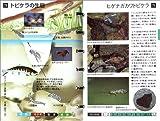 アングラーのための水生昆虫フィールド・ノート 画像