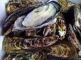 日生産殻付き牡蠣3kg